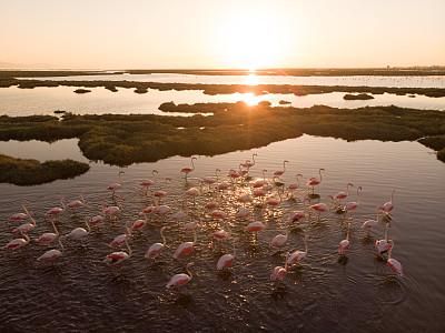 火烈鸟,湿地,著名自然景观,动物主题,安静,土耳其,野生动物,环境,草类,禅宗