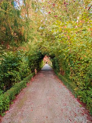 小路,宁静,花纹,园林,旅途,无人迹,草,梦想,想法,户外