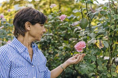 园艺,老年女人,动作,活力,肖像,园林,植物,仅一个老年女人,户外,仅女人
