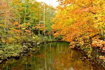 秋天,国家公园,日本,青森县,八幡平市,十月,山口,枝繁叶茂,池塘,树干