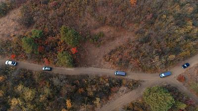 黎明,森林,航拍视角,土路,农业,旅途,线条,沥青,汽车,交通