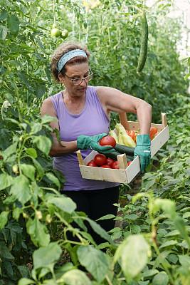 园艺,温室,老年女人,农业,园艺手套,拿着,农场,植物,户外,仅女人