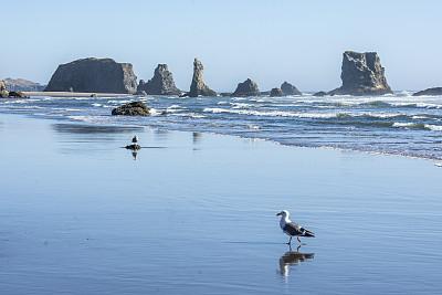 班顿,美国西北太平洋地区,湿,俄勒冈郡,海浪,奥勒冈海滨,鸟类,海岸线,波浪,俄勒冈州