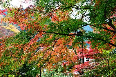 东京,秋天,叶子,山,八王子,城市,高尾山,橙色,著名景点,自然美