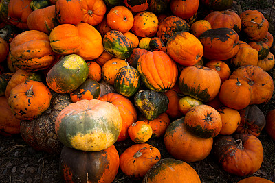 Farm, Food, Pumpkin Pie, Dessert, Holiday - Event,halloween