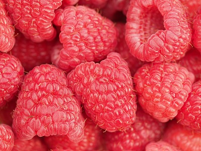 覆盆子,清新,红色,健康食物,图像,浆果,蓝莓,黑刺莓,美国,无人
