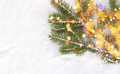 光,冬青树,嫩枝,背景虚化,华丽的,请柬,贺卡,圣诞装饰物,波兰