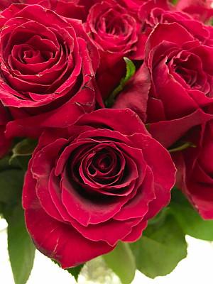 玫瑰,红色,周年纪念,清新,自然界的状态,浪漫,婚礼,春天,植物,户外