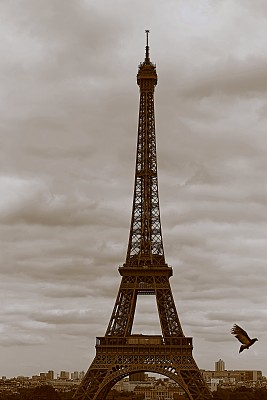 Freedom: Dove flying over Eiffel Tower from Trocadero at sunset – Paris, France