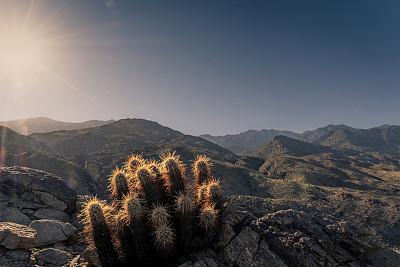 古奇拉谷,峡谷,棕榈叶泉,徒步旅行,仙人掌,沙漠,植物,狭缝谷,户外,高处