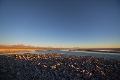 野生动物,火烈鸟,阿塔卡马沙漠,自然荒野区,野外动物,地形,沙漠,拉古娜海滩,动物主题,动物群