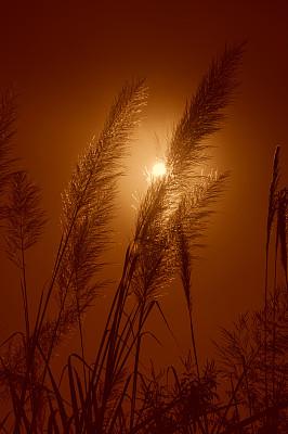 山,都市风光,云景,山脊,曙暮光,云,橙色,黄昏,草,自然美