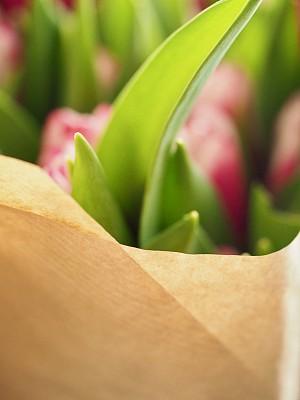 郁金香,花束,白色,粉色,垂直画幅,图像,美国,自然美,无人,图像聚焦技术