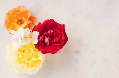 请柬,贺卡,华贵,浪漫,复古风格,婚礼,模板,装饰物,乡村风格,植物