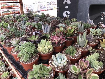 花盆,肉质植物,多样,环境,仙人掌,装饰物,沙漠,植物,园艺,影棚拍摄