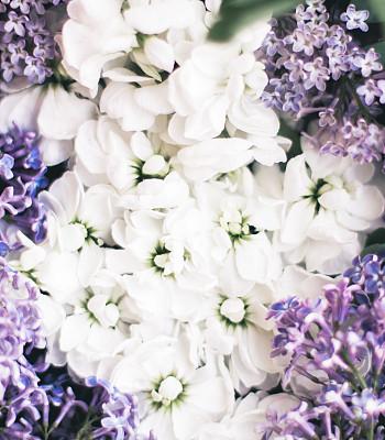 美,请柬,贺卡,华贵,浪漫,复古风格,婚礼,模板,春天,植物