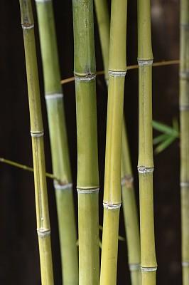 竹,自然,垂直画幅,热带气候,图像,草类,枝,草,美国,无人