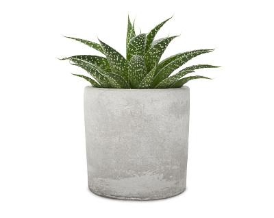 水泥,锅,气促,一个物体,背景分离,花盆,热带气候,芦荟,仙人掌,现代