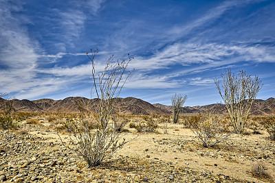 植物,蔓仙人掌,清新,加利福尼亚,仙人掌,自然美,春天,沙漠,户外,天空
