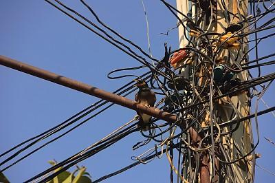 电缆,家八哥,电话机,混沌,鹭管鱼,传媒,商务,电话线,无线电通信装置,泰国
