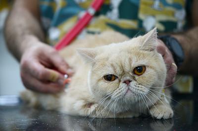 猫,兽医,可爱的,专门技术,健康保健,专业人员,听诊器,药,肖像,动物耳朵