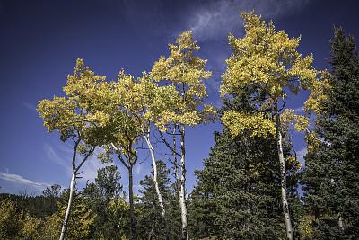 科罗拉多州,秋天,白杨类,接力赛,美国西部,草,植物,户外,天空,草地