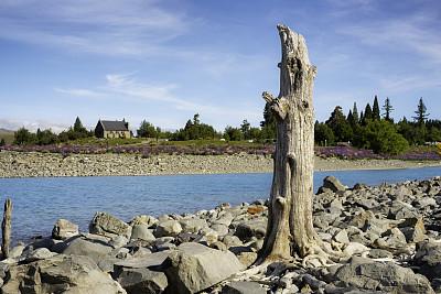 好牧羊人教堂,帝卡波湖,当地著名景点,特卡波,著名景点,自然美,死亡的植物,巨石,湖,羽扇豆