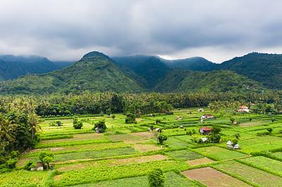 稻,梯田,巴厘岛,农业,热带气候,枝繁叶茂,草,稻田,农场,植物