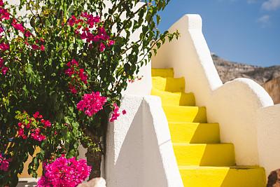 圣托里尼岛,三角梅,街道,希腊诸岛,希腊,自然美,园林,植物,背景,地中海