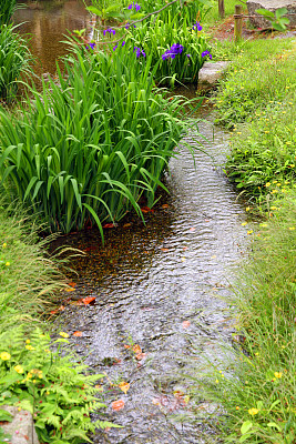 园林,河流,亚洲,蕨类,自然,鲜花盛开,垂直画幅,图像,草,春天