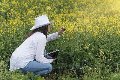 领导能力,黄色,户外,田地,农业,油菜花,春天,破土动工,女人,步行
