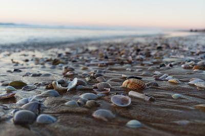 黄昏,海滩,自然,图像,无人,贝壳,水平线,非都市风光,户外,水平画幅