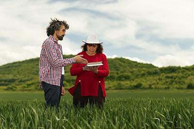 领导能力,商务,女人,绿色,永远年轻,小麦,户外,田地,农作物,农业