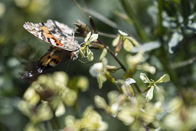 蝴蝶,热带气候,橙色,鳞翅类,翅膀,枝繁叶茂,一只动物,色彩鲜艳,动物群,小的