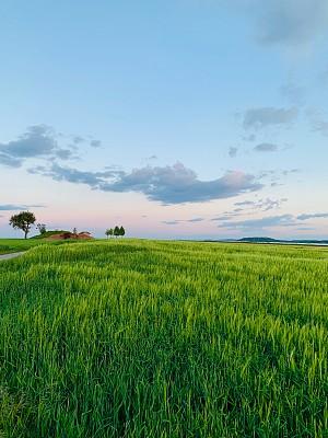 田地,农业,云景,环境,云,草,自然美,农场,植物,夏天