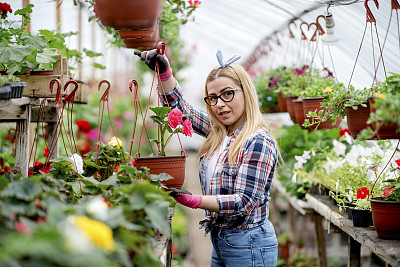 青年女人,温室,成年的,仅成年人,青年人,手,职业,花卉商,专业人员