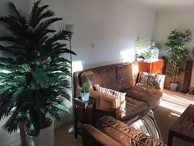 现代,住宅内部,南,高雅,房屋,地毯,室内植物,竹,棕榈树,茶几