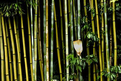 竹林,户外,季节,夏天,春天,绿色,竹子,木制,式样,热带气候