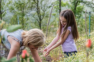 提举,甘菊花,春天,母女,园林,家庭,仅儿童,与众不同,儿童,植物