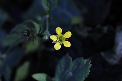 黄色,草本,野花,木制,芳香的,一个物体,图像,萨里市,无人