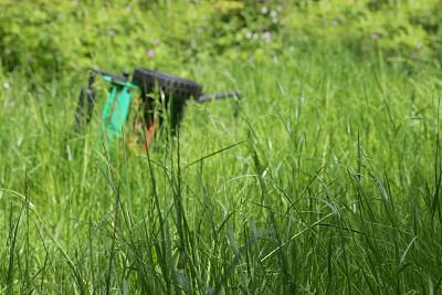 草坪,簇叶从生的,割草机,园林,园艺,图像,种子,肥料,生长,切断