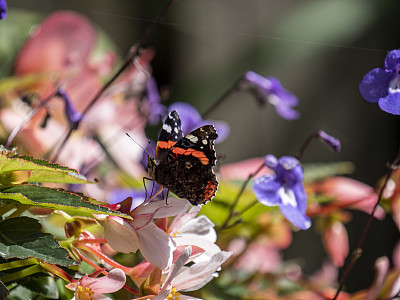 野生动物,自然美,动物,植物,夏天,自然,荷兰南部,图像,花粉,油桃