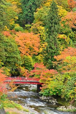 公园,秋天,青森县,灌木,中野市,橙色,著名景点,自然美,枫叶,流水
