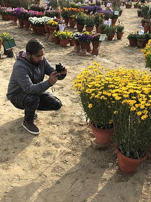花盆,园林,印度,黄色,相机,德里,夏天,花坛,图像,一年生植物