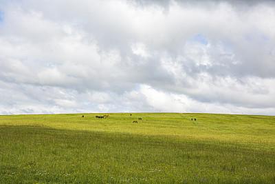 草,草原,云景,自由,云,简单,美国西部,中国,植物,背景