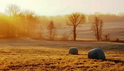 法国,黎明,农业,草垛,户外,天空,草地,自然,秋天,风景