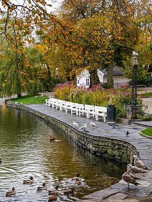 秋天,挪威,橙色,高清格式,无人,公园,柔和色,鸟类,倒影湖,乡村风格