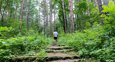 台阶,慢跑,男人,森林,活力,越野赛跑,运动,仅男人,仅一个男人,公园