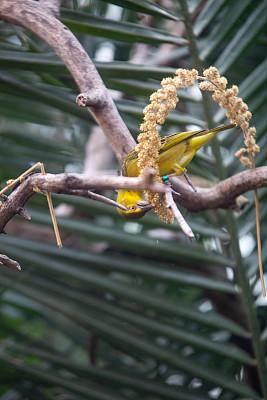 黄色,鸟类,枝,外立面,芬兰,红色,热带雨林,垂直画幅,图像,雄性动物