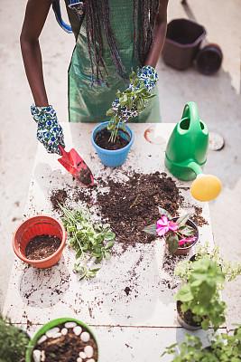 小企业,菜园,农业,专业人员,花盆,商业金融和工业,兼职工作人员,植物,户外,园艺